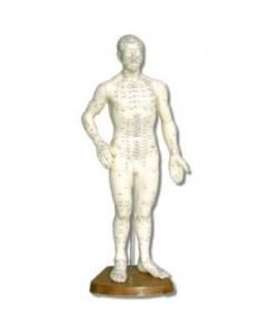 "Chinese Body Model - Male 18"""