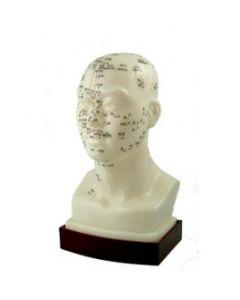 "Chinese Head Model 9"""